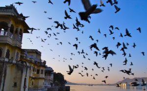 Omkara, Inde